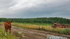Transsyberia Rally 2008: quarta puntata - Immagine: 5