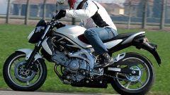 Suzuki Gladius 650 - Immagine: 1