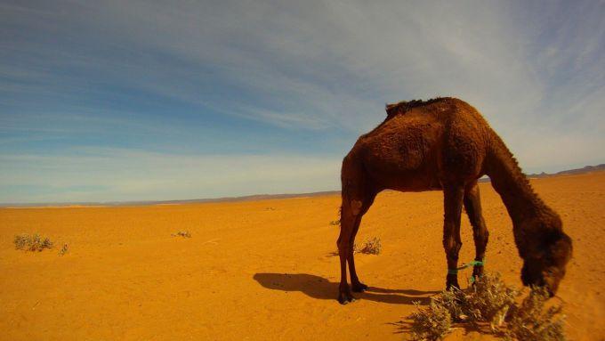 Immagine 108: In Marocco con la Yamaha Super Ténéré