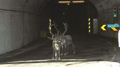 Raid Norge 2006 / Settima tappa - Honningsvag / Alta (280 km) - Immagine: 26
