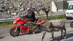 Raid Norge 2006 / Settima tappa - Honningsvag / Alta (280 km) - Immagine: 27