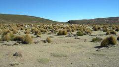 QUINTO GIORNO: DESERTO E VALLI IMMERSE NELLA NATURA - Immagine: 21