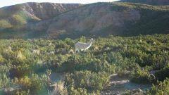 SECONDO GIORNO: IL DESERTO SALAR DE UYUNI - Immagine: 17