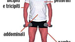 Muscoli da manubrio - Immagine: 16