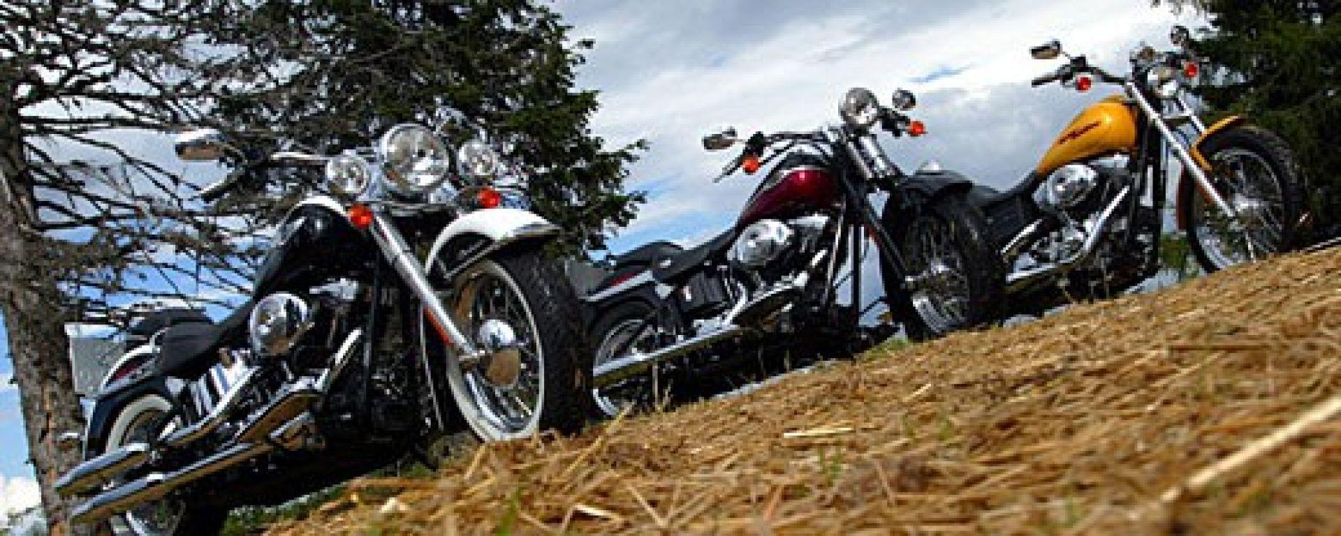 Harley 2005