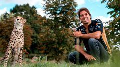Antonio Felix Da Costa e il ghepardo simbolo della scuderia Ds Techeetah