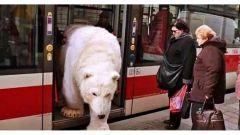 ATM: cambiano le regole per il trasporto di animali  da compagnia sui mezzi pubblici