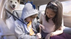 Bambini e animali in auto in sicurezza