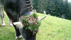 Bolzano - Sarentino - Vipiteno - Immagine: 6