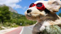 Animali in auto: l'igienizzazione secondo Carglass