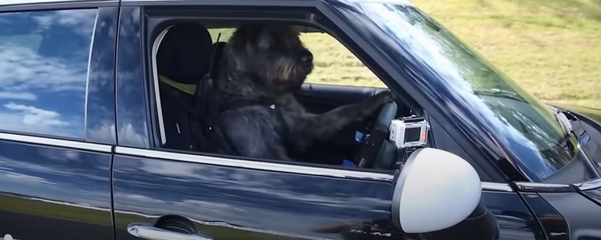 Cani al volante: il video su Youtube