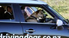 Cani al volante - Immagine: 11