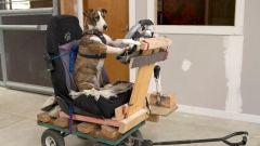 Cani al volante - Immagine: 10