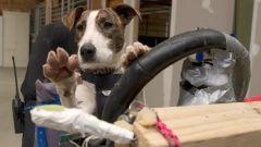 Cani al volante - Immagine: 9