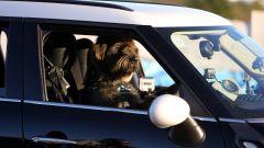 Cani al volante - Immagine: 8