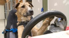Cani al volante - Immagine: 6