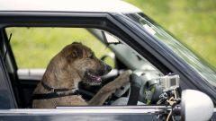 Cani al volante - Immagine: 1