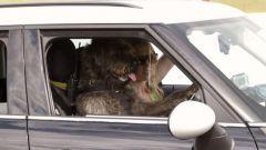 Cani al volante - Immagine: 4