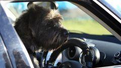 Cani al volante - Immagine: 18