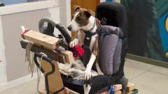 Cani al volante - Immagine: 12
