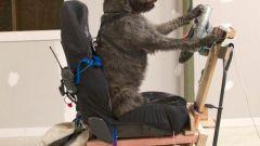 Cani al volante - Immagine: 13