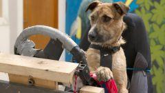 Cani al volante - Immagine: 3
