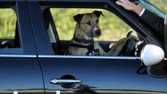 Cani al volante - Immagine: 17
