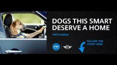 Cani al volante - Immagine: 16