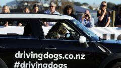 Cani al volante - Immagine: 15