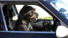 Cani al volante - Immagine: 14