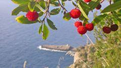 Dal Promontorio di Portofino al Parco Beigua - Immagine: 10