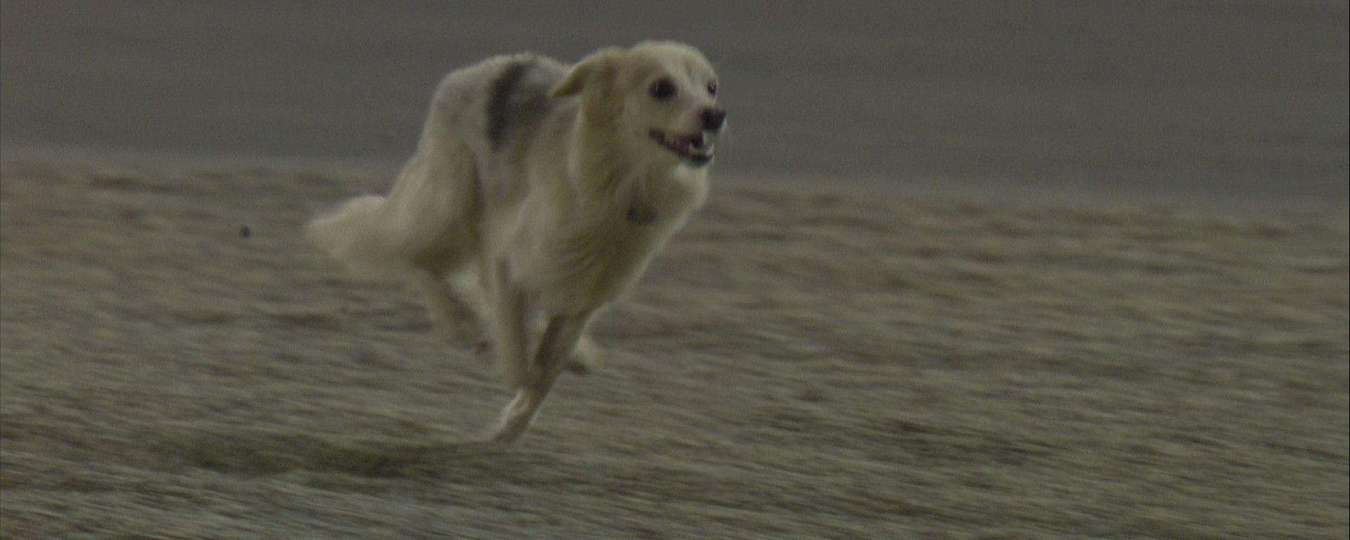 F1, GP Bahrain 2020: il cane che ha invaso la pista