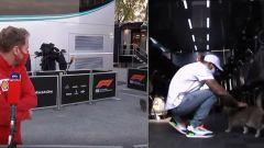 F1, GP Emilia Romagna: Mattia BiGAtto, il gatto che snobba Vettel