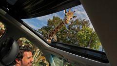 Ford Edge: dal tetto apribile fa capolino una giraffa