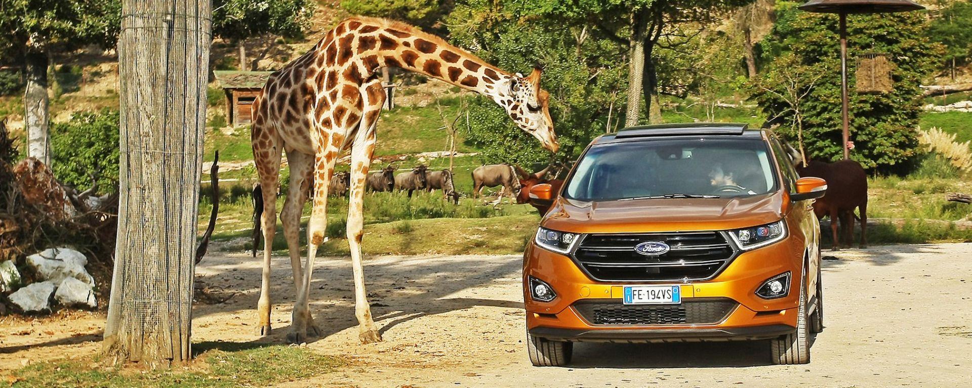 Ford Edge: la prova di Mark Grylls