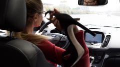 Ford Kuga 2017: uomini e donne a confronto - Immagine: 39