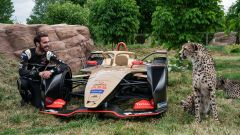 Formula E, Jean-Eric Vergne con il ghepardo Bajrami al Big Cat Sanctuary