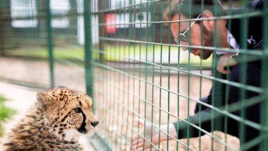 Formula E: Jean-Eric Vergne (DS Techeetah) e il ghepardo Willow
