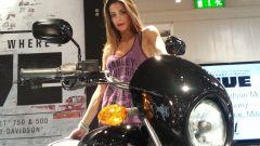 Harley Davidson Street 750 - Immagine: 12
