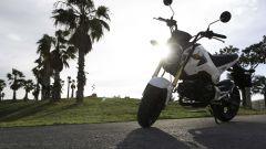 Honda MSX 125 - Immagine: 18