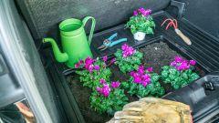 Il MegaBox come fioriera per i ciclamini? Perché no...