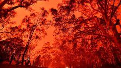 Incendi Australia: la F1 monitora la situazione