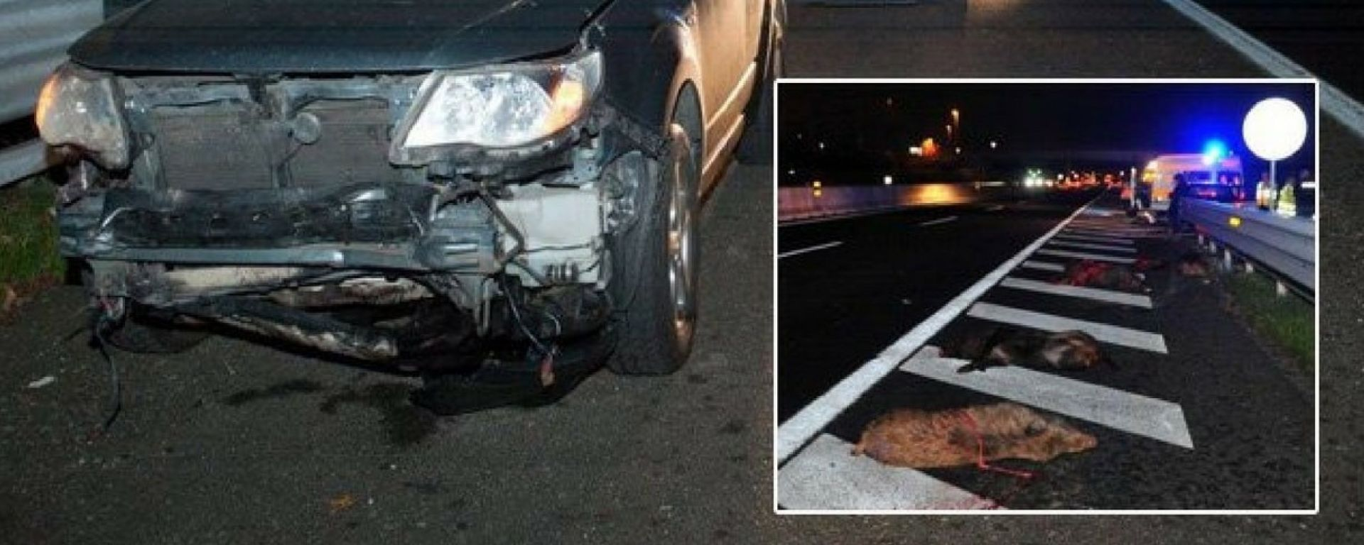 Cinghiali e altri animali, l'incidente sull'A1 è solo l'ultimo
