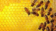 Inquinamento urbano, api come sentinelle antismog. Il progetto BEEing