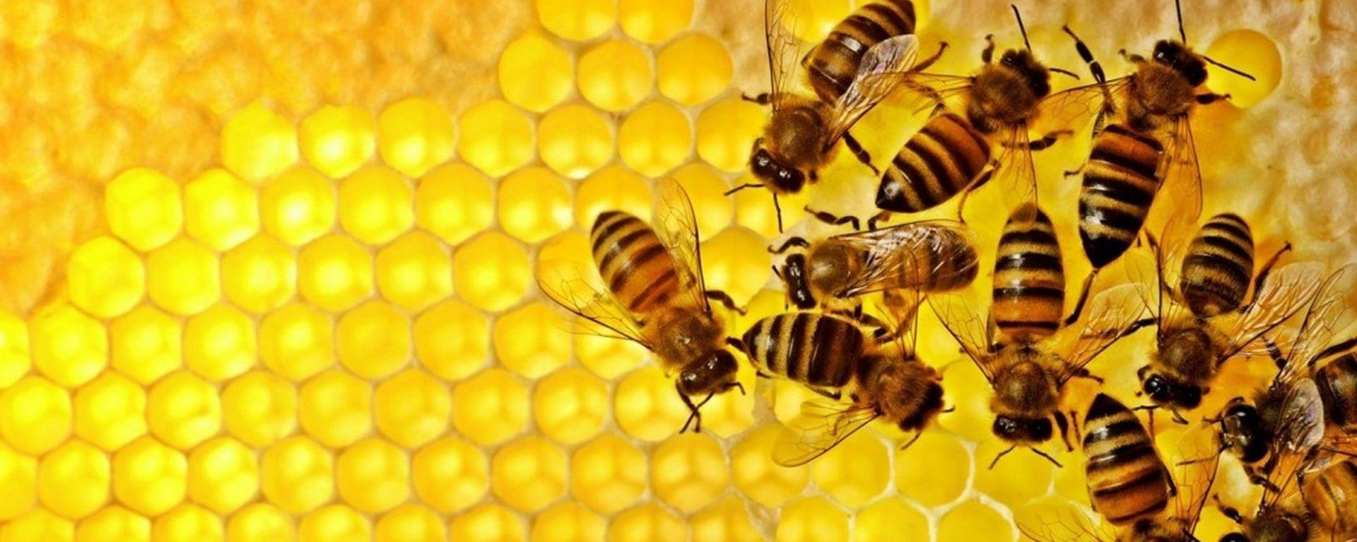 Inquinamento, come misurarlo? Facile: grazie alle api