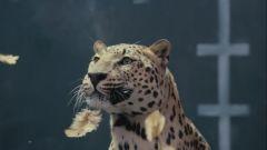 Jaguar vs Chicken - Immagine: 3