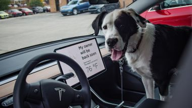 La modalità Dog Mode di Tesla