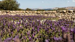 La Sardegna e l'isola di Culuccia