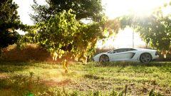 50° Lamborghini: il Grande Giro al via l'8 maggio - Immagine: 6