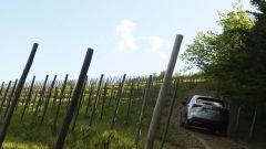 Lexus NX Hybrid: il suv ibrido alla prova del Vigneron - Immagine: 19